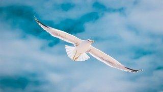 vogel vrijheid